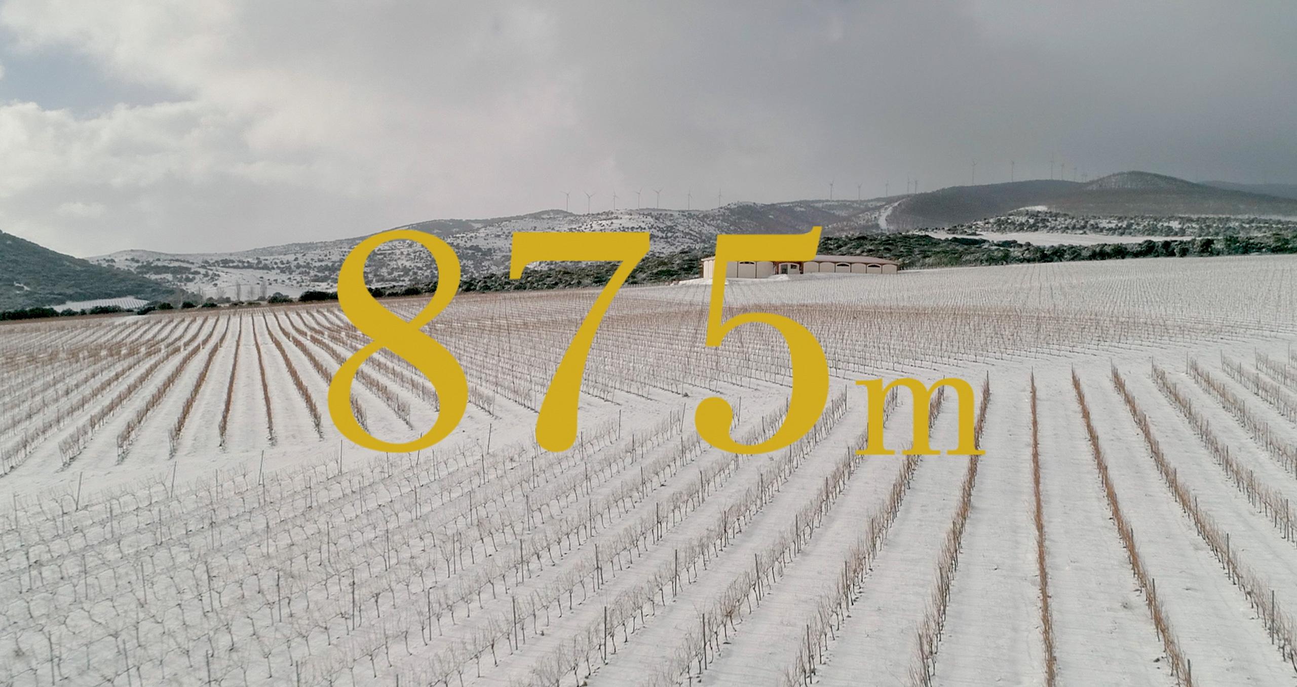 875 m. tempranillo