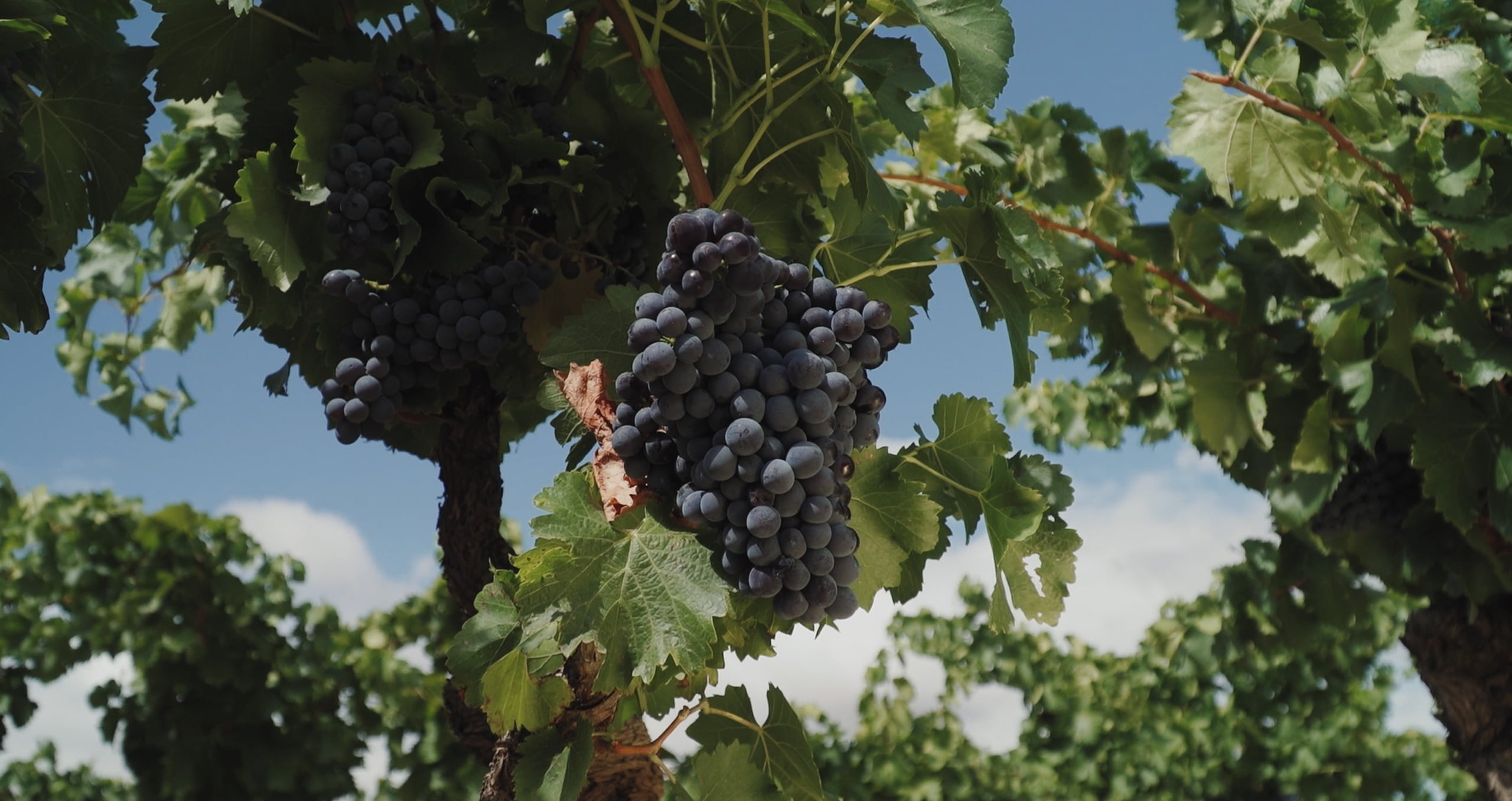 Real Agrado Rioja